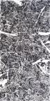 无极抽象——汪京元《无色界》亮相艺术西湖·国际水墨博览会