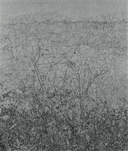 《草衣No.5》,絹版,103x85cm,2011
