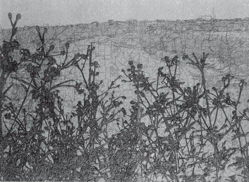 《草衣No.4》,絹版,103x140cm,2010